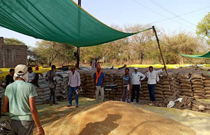 dhar-crops-purchase