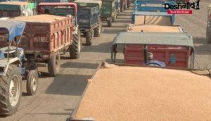 dhar-wheat-purchase