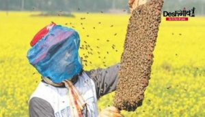 honeybee-keeping