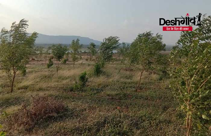 dhar neem trees
