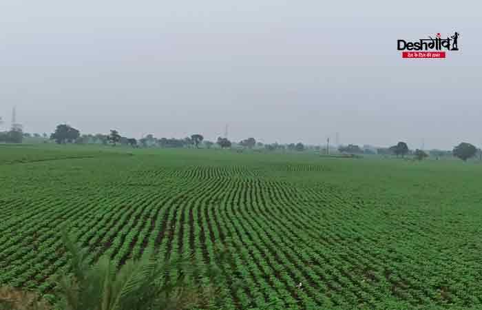 rain-dhar