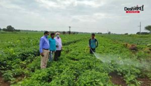 dhar-crops
